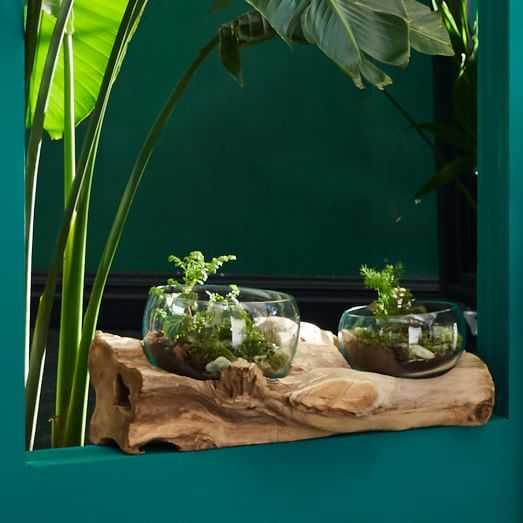 Wood + Glass Terrariums - XLarge - West Elm