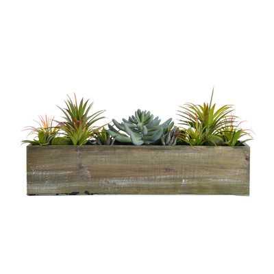 Succulents in Wooden Pot - Wayfair