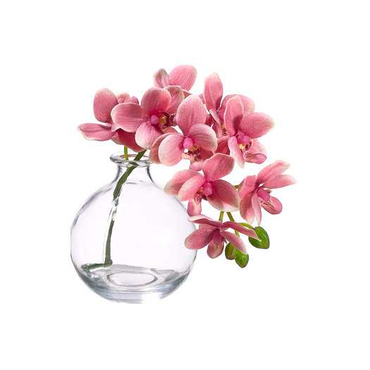 "10"" Phalaenopsis Orchid in Glass Vase - AllModern"