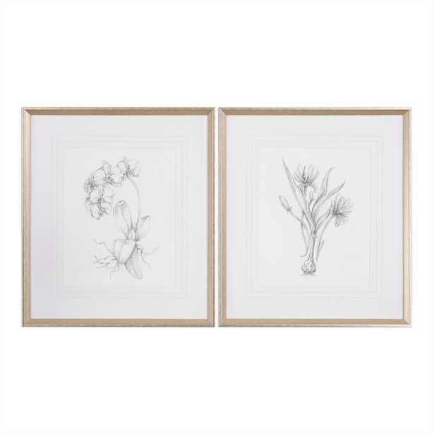 Botanical Sketch Art, Set of 2 - Cove Goods