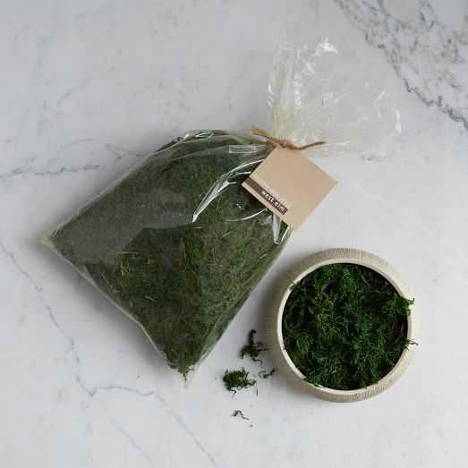 Green Moss - West Elm