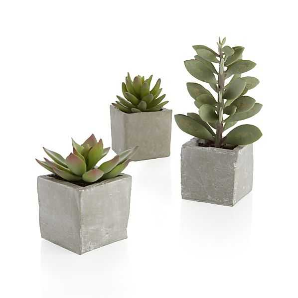 3-Piece Potted Artificial Succulent Set - Crate and Barrel