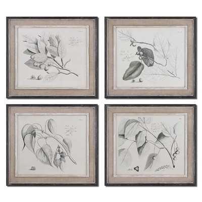 "Sepia Leaf Study by Grace Feyock 4 Piece Original Painting Set - 21"" H x 24"" W x 1"" D- Distressed - Wayfair"