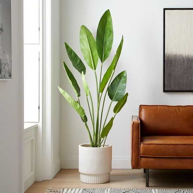 Faux Potted Bird of Paradise, 6 Feet - West Elm