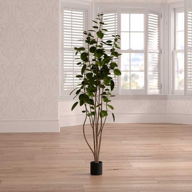Cotinus Coggygria Foliage Tree in Pot - Wayfair