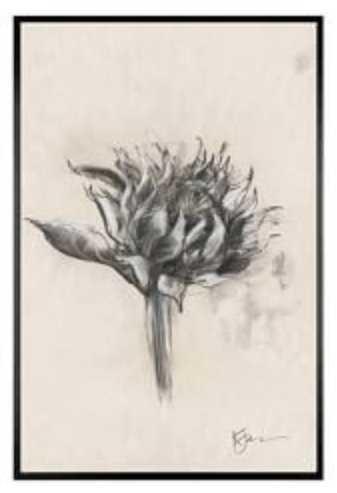 Charcoal Sunflower Sketch Framed Prints 11 x 13 Framed Matte Black - Pottery Barn