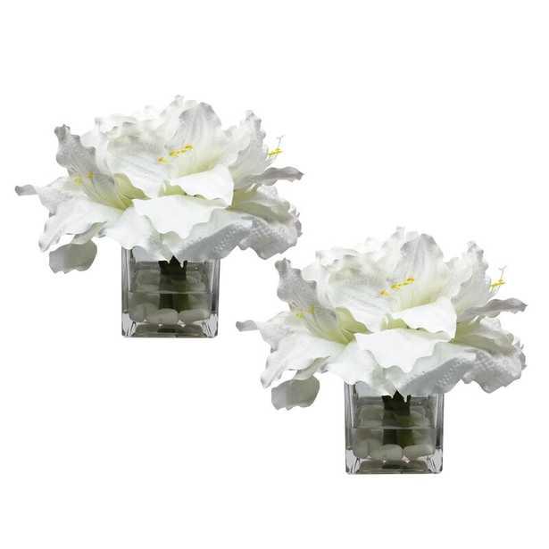 Amaryllis Cube Floral Arrangement in Vase (Set of 2) - Wayfair