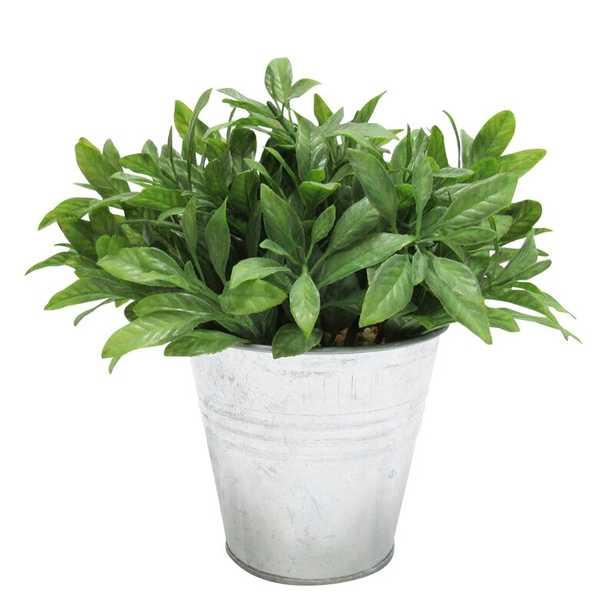 Sage Bundle Herb Plant in Pot - Wayfair