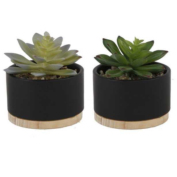 2 Piece Succulent Plant in Pot - AllModern