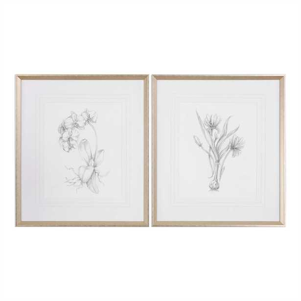 Botanical Sketches, S/2 - 28x32 - Silver/Taupe Frame-with mat - Hudsonhill Foundry
