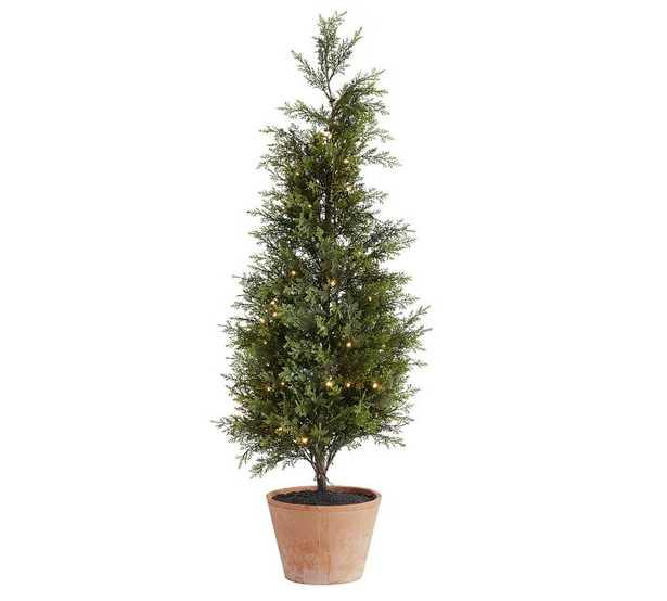 Lit Juniper Trees, Green - Medium - Pottery Barn