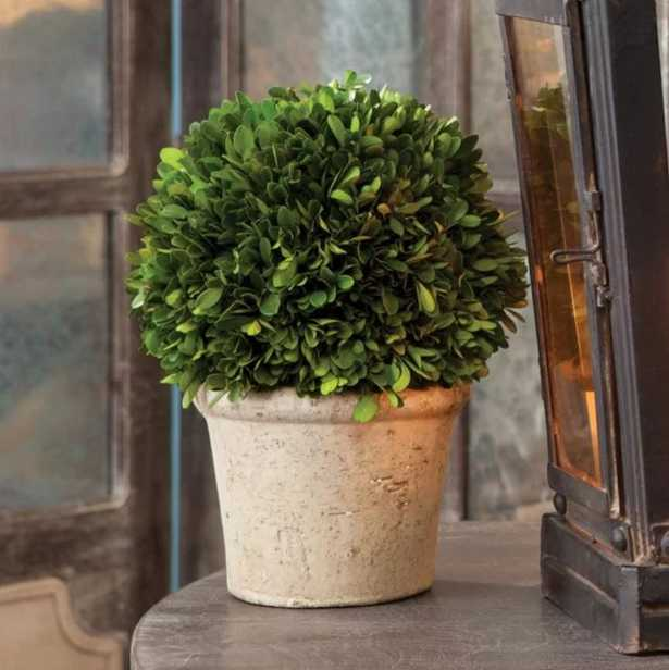 Preserved Greens Ball Boxwood Topiary in Pot - Birch Lane