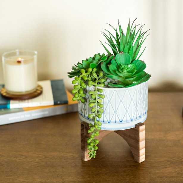 Agave Succulent in Planter - Wayfair