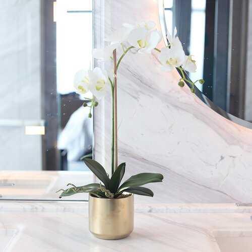 Double Phalaenopsis Orchid Floral Arrangement in Ceramic Vase - Wayfair