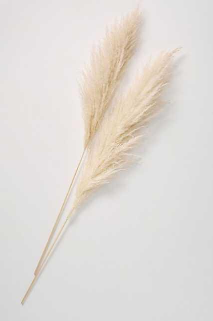 Dried Pampas Grass Three-Stem Bouquet - Anthropologie