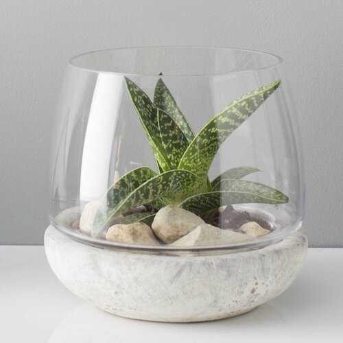 Casa Glass Terrarium - AllModern