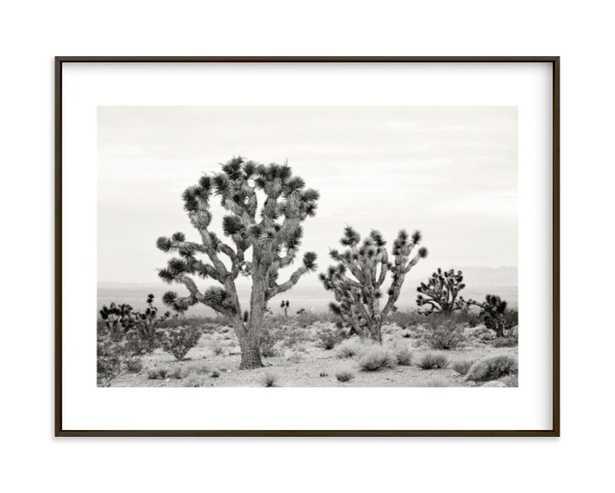 Joshua Tree In September - Minted