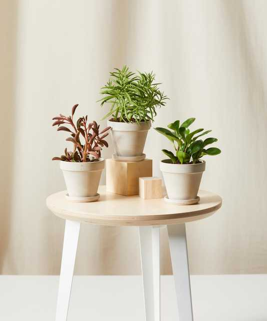 Pet-Peromia Collection - Bloomscape