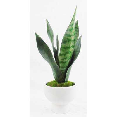 Faux Sanseveria Plant in Pot - Wayfair
