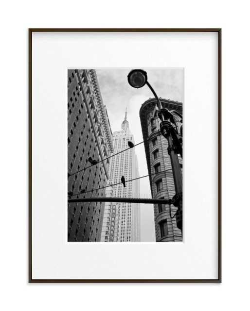 "Birds of New York  // 18"" x 24"" // Matte Black Frame // Matted // Black - Minted"