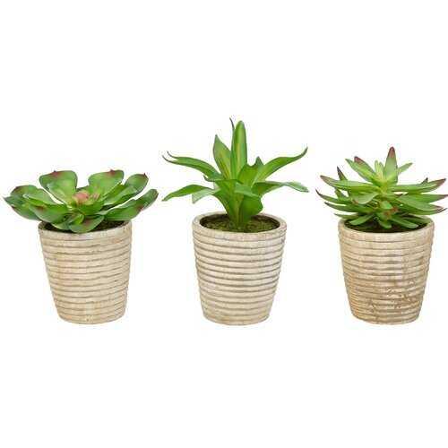 Artificial Succulent Plant in Pot - Wayfair