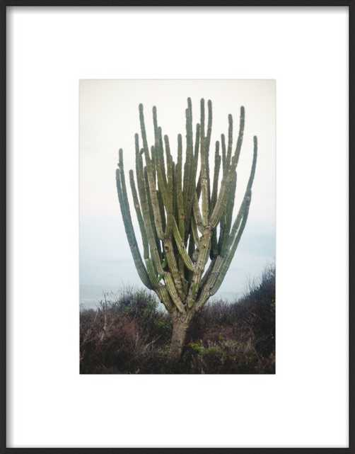 Cactus - Artfully Walls