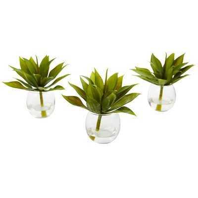 3 Piece Agave Succulent Plant in Vase Set - Wayfair