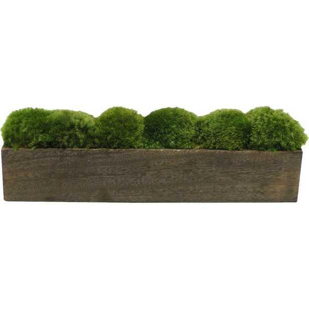 Moss Plant in Planter - Wayfair