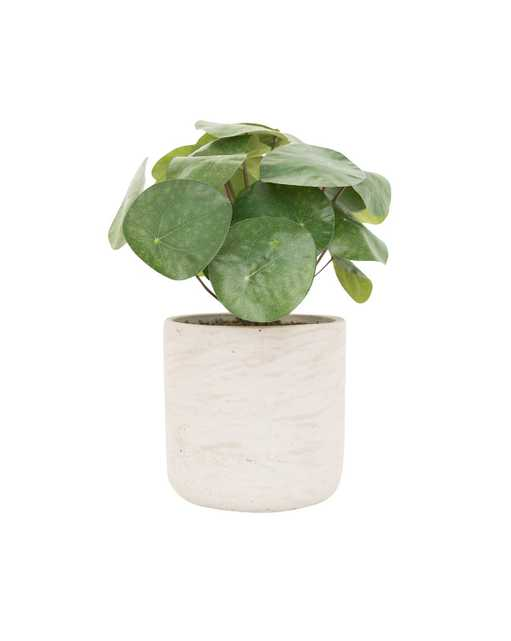 FAUX POTTED PANCAKE PLANT - McGee & Co.