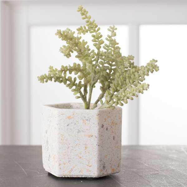 Waltman Mini Flower 4-Piece Cement Pot Planter Set - Wayfair