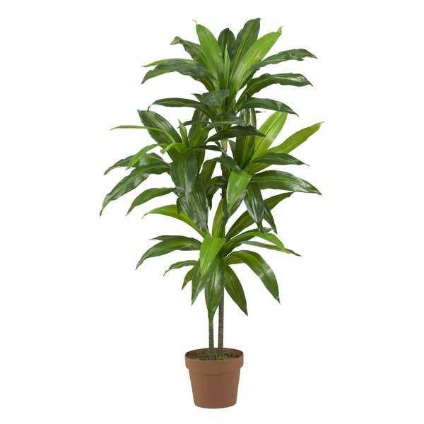 Floor Dracaena Plant - Birch Lane
