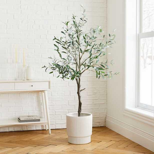 Olive Tree + Large White Fluted Planter Bundle - West Elm