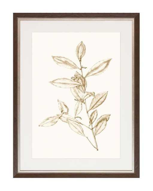 SEPIA BOTANICALS 1 Framed Art - McGee & Co.