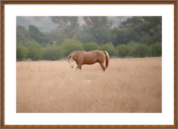 horse no. 12 - Artfully Walls