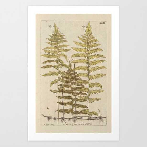 Vintage Fern Botanical Art Print - Society6
