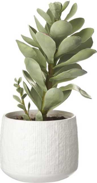 """Potted Faux Succulent White Pot 14"""" - CB2"""