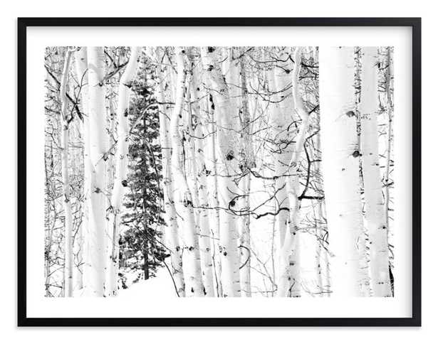 "Colorado Winter Pine - 54"" x 40"" - White Border - Matte Black Frame - Minted"