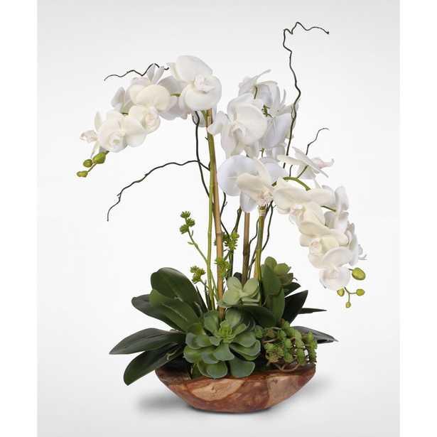 Orchids Floral Arrangement in Vase - Wayfair