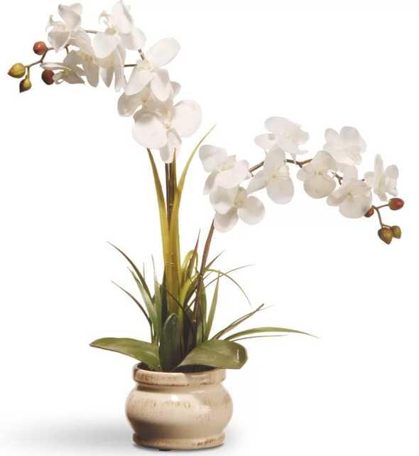 Spring Orchid Flowers in Pot - Wayfair