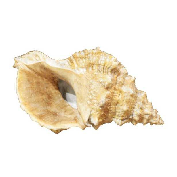 Shell - Wayfair