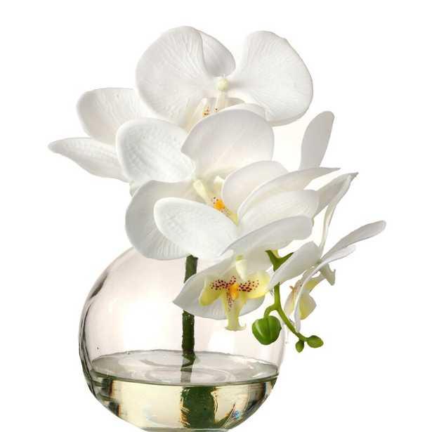Phaleanopsis Orchids Floral Arrangement in Jar - Wayfair