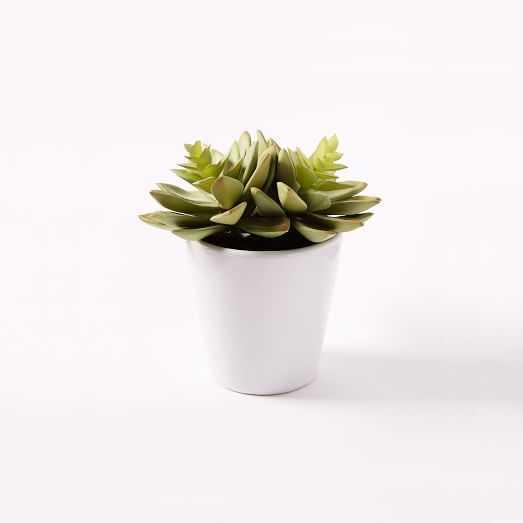 Faux Succulent - Echeveria - West Elm