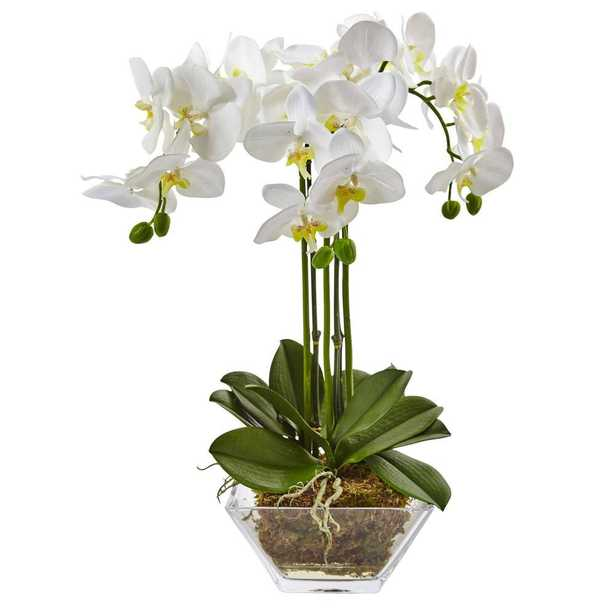 Triple Phalaenopsis Orchid in Clear Glass Vase - Fiddle + Bloom