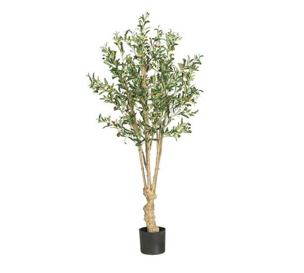 Faux Olive Tree, 5' - Pottery Barn
