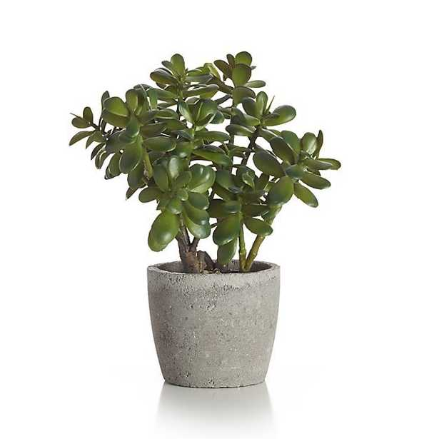 Potted Artificial Jade Plant - Crate and Barrel