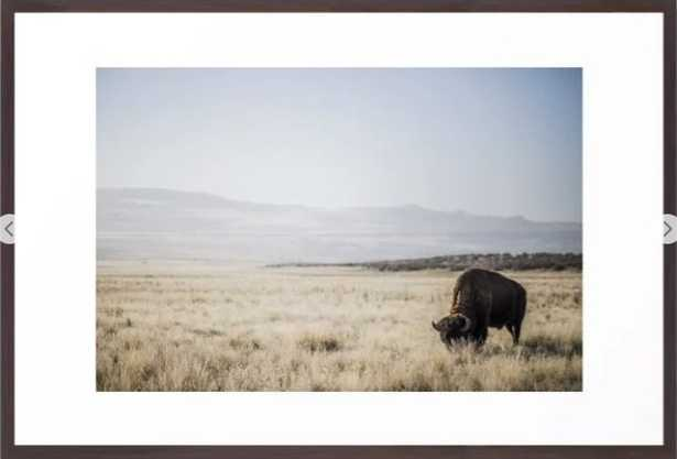 Bison Grazing Framed Art Print by Garrett Lockhart - Society6