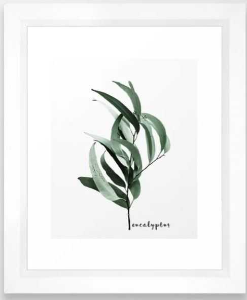 Eucalyptus - Australian gum tree Framed Art Print 276 by Gale Switzer - Society6