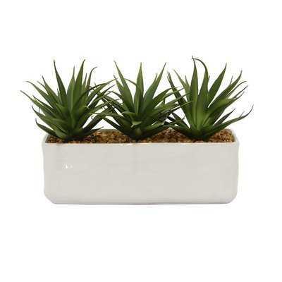 Faux Desktop Succulent Plant in Rectangular Prism Pot - Wayfair
