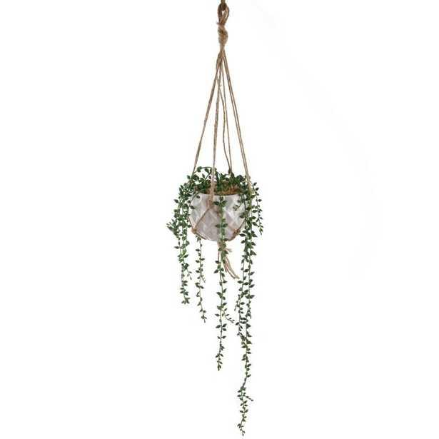 Donkey Tails Hanging Ivy Plant - Wayfair