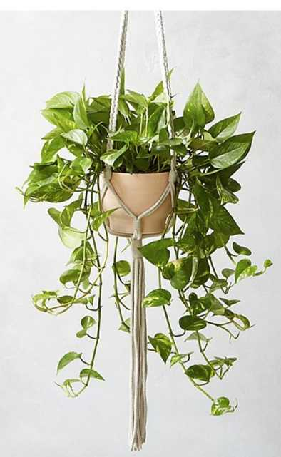 macramé plant holder - plant not included - CB2